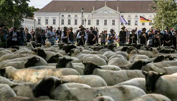 Shepherds drive a herd of sheep in front of Bellevue presidental palce in Berlin to protest falling