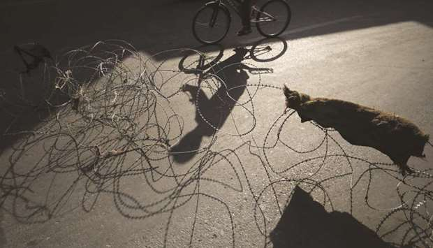 A man rides a bicycle past concertina wire during restrictions in Srinagar yesterday.