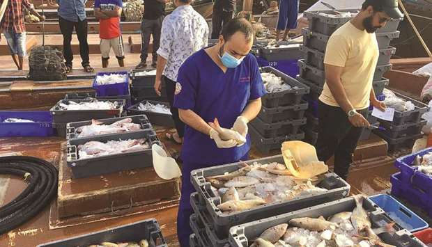 A food inspector at work at Al Khor and Al Thakhira fish harbour.